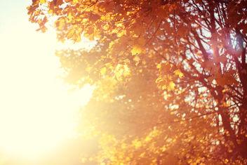 November sun - Free image #284657
