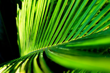 Palm frond - Kostenloses image #284777