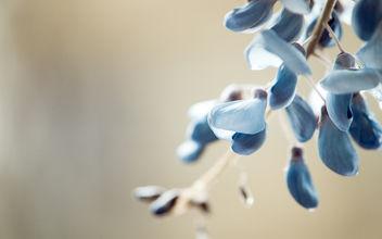 lilac - image #284947 gratis