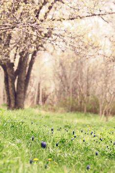 Spring - Kostenloses image #285017