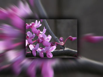 Bloom - image #285337 gratis