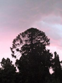 Pink - image gratuit #285797
