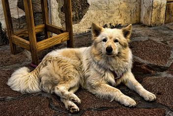 vida de perros - Free image #285987