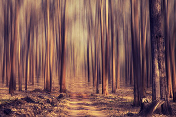Forest dream! - Kostenloses image #286077