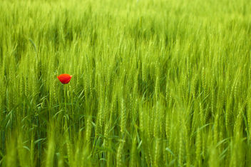 Lost in Field - image #286367 gratis