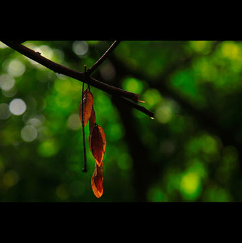 Light & Bokeh - бесплатный image #286537