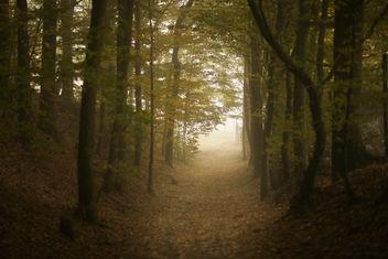 Path I - Free image #286657