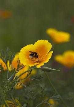 Bee - бесплатный image #286837