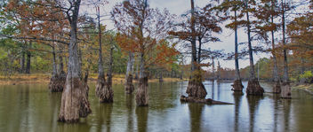 Harrell Lake standing on the floating dock fall 2013 - Free image #290127