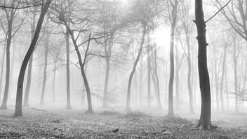 Winter Forest - image gratuit #290377