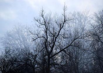 Fog Romantic - Free image #290947