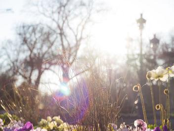 Sunlight - image gratuit(e) #291157