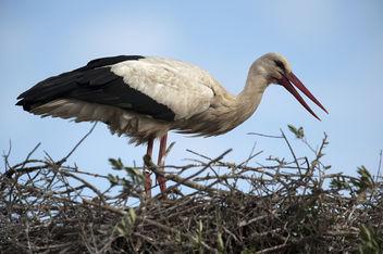 stork - Kostenloses image #291317
