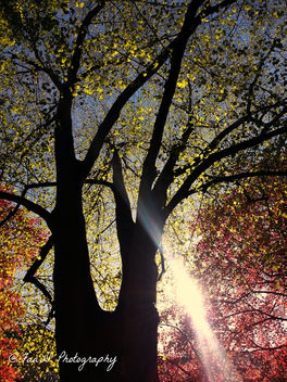 Beautiful Tree Color ....With a pretty sunbeam - Free image #291557