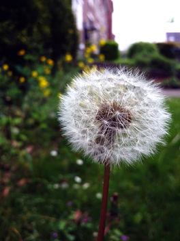 Dandelion - image gratuit #291737