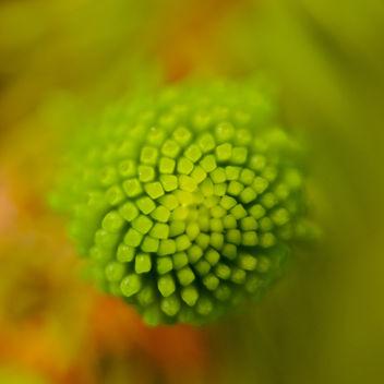 Natural spirals - Free image #291827