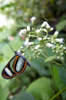 Butterfly II - image gratuit #292597