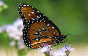 beautiful Butterfly - Kostenloses image #292657
