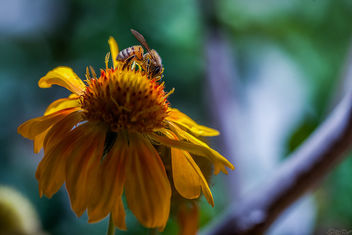 Busy Bee - image #292717 gratis