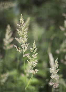 Grass - Kostenloses image #292837