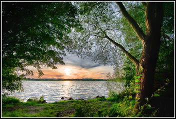 Tree by the Lake - image #293457 gratis