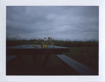 Overcast - Free image #293477