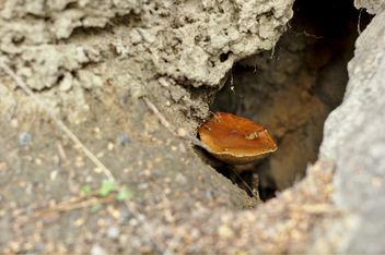 Mushroom caves - Free image #293807