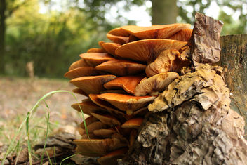 Mushroom hill - image #294137 gratis