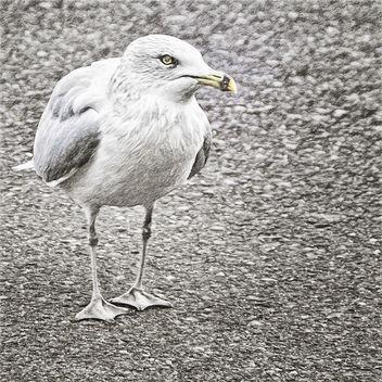 Gull - Free image #294257