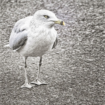 Gull - image gratuit #294257