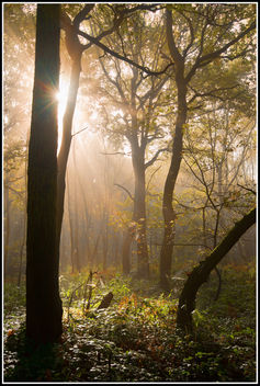 Autumn mist - image #294357 gratis