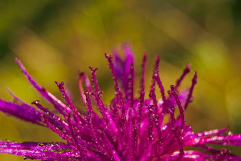 Purple chaos - image #294377 gratis