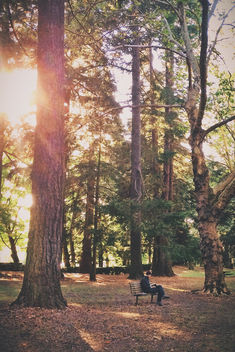 Reading room, Laurelhurst Park - Free image #294417