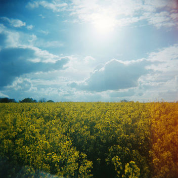 Summer Fields - image gratuit #294447