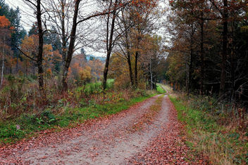 Fall in Germany - Free image #294557