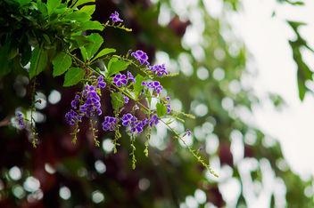 Purple - Kostenloses image #294697