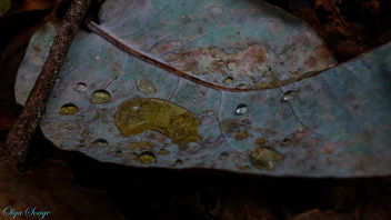 Hoja de eucalipto - Free image #295267