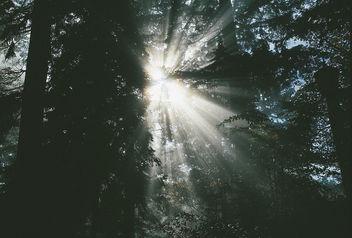 Autumn Sun Rays - Free image #295437
