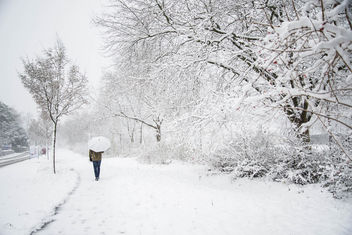 Walking in a winter wonderland? - Free image #295547