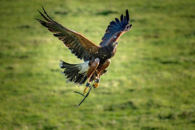Bird of Prey - Free image #295807