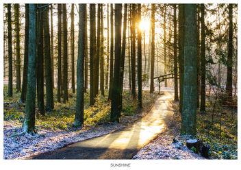 Sunshine - image gratuit #295867