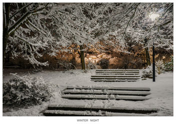 Winter Night 4 - Free image #296007
