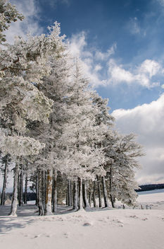 Winter trees - image #296517 gratis