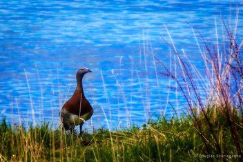 Tierra del Fuego - Free image #296547
