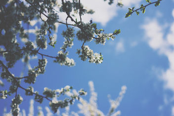 Summer - бесплатный image #296637