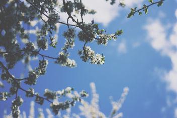 Summer - Free image #296637