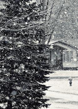 Snow Globe Snow - Kostenloses image #296697