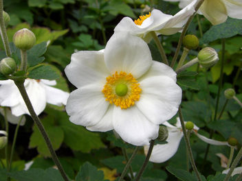 White and yellow flower - Free image #296847