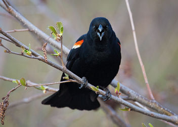 Birds have more fun. - Kostenloses image #297467