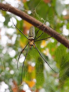 Spider on a net - image gratuit(e) #297587